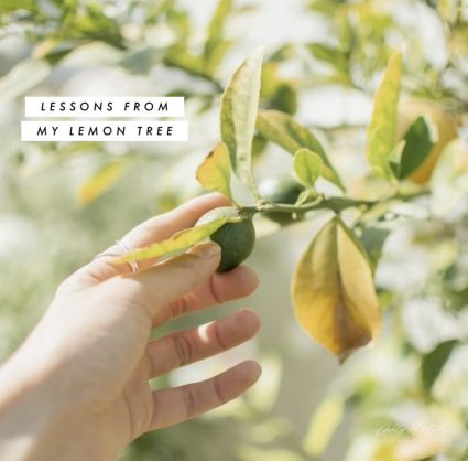 Lessons learned from my lemon tree
